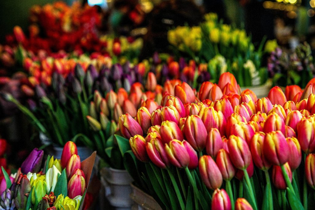 Tulips at Flower market, Utrecht