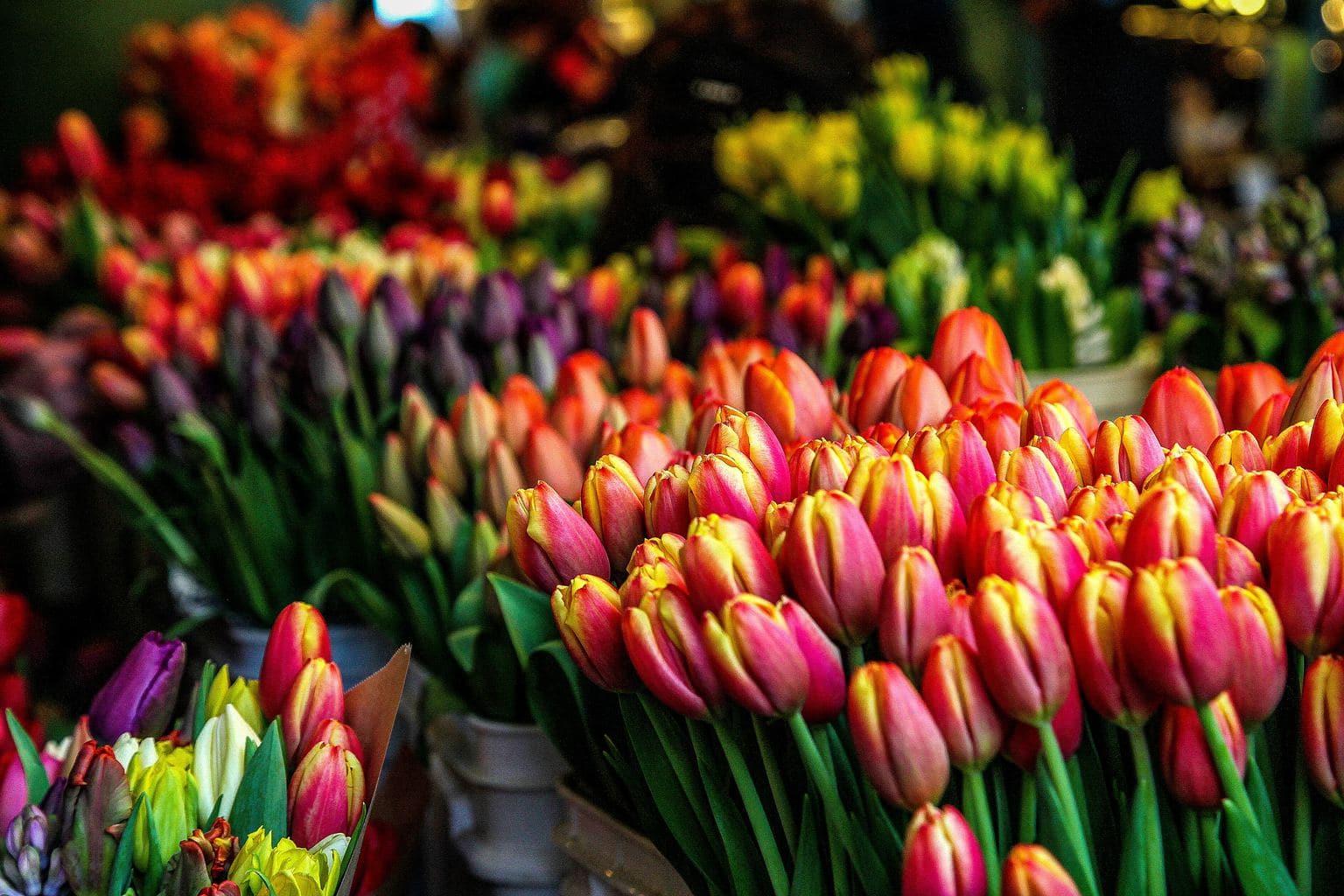 Tulips at Flower market, Utrecht